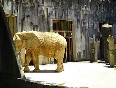 アフリカゾウ2.jpg
