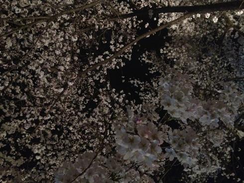 今井花粉症.JPG