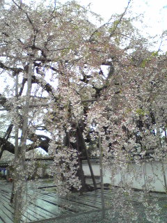 鈴木桜.jpeg
